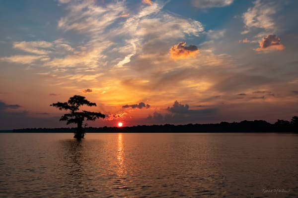 Sunrise Lone Cypress  7950 Reelfoot Lake Art | Koral Martin Fine Art Photography