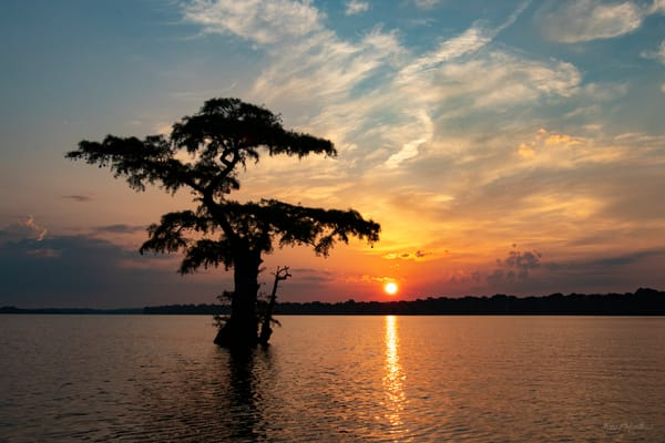 Sunrise Lone Cypress  7966 Reelfoot Lake Art | Koral Martin Fine Art Photography