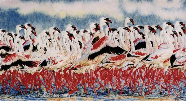 Flamingo   Limited Edition  Art | Mercedes Fine Art