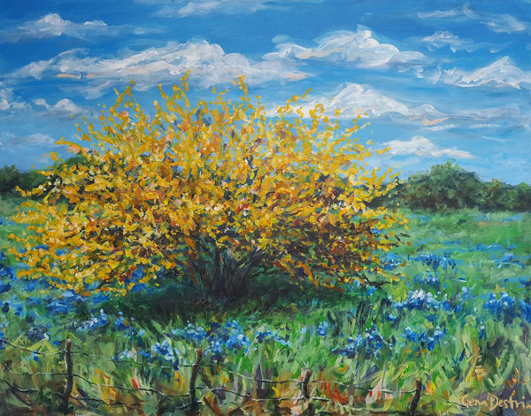 Texas Huisache in Bluebonnets painting fine art prints