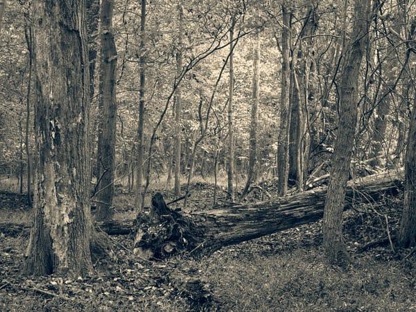 Nature Bw 1492 Photography Art | Dan Chung Fine Art