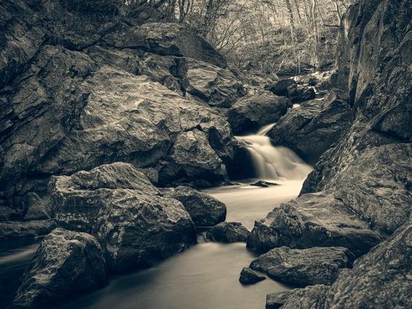 Nature Bw 1570 Photography Art | Dan Chung Fine Art