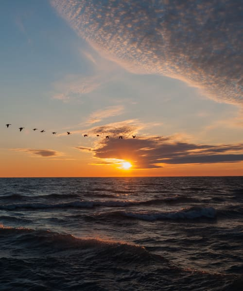 Sunrise With Geese 20x24 Photography Art | Ted Glasoe, Artist