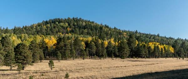Autumn Gold Fall Colors Pines Panorama
