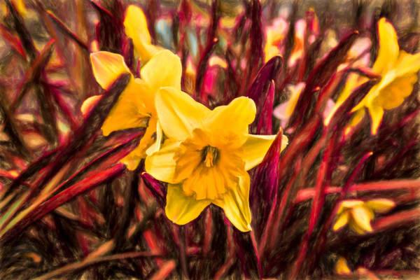 """Daffodils"" Photography Art | Inspired Imagez"