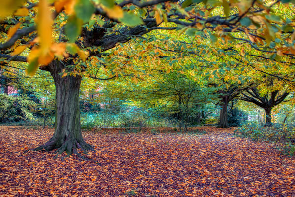 Perfect Fall On Hampstead Heath Art | Martin Geddes Photography
