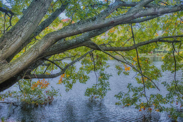 Vale Of Health Pond Photography Art | Martin Geddes Photography