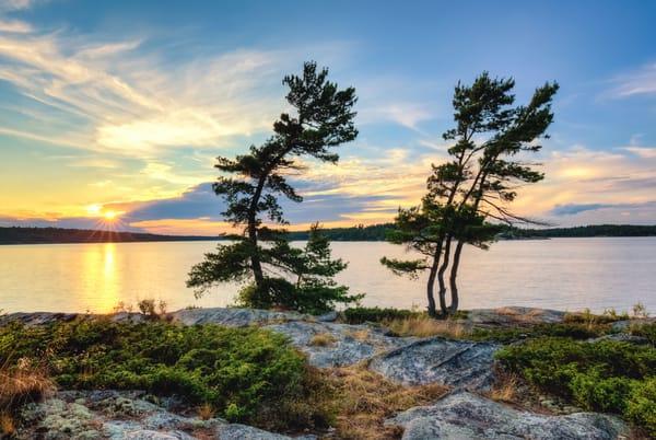 Sunset Pines Photography Art | Trevor Pottelberg Photography