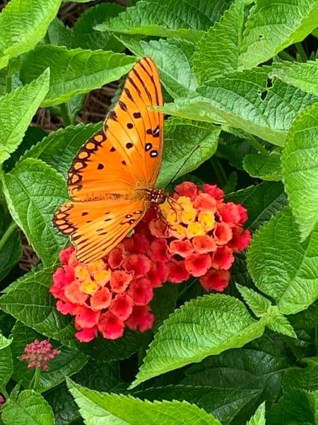 Butterfly 2 Art | Nisha Strain