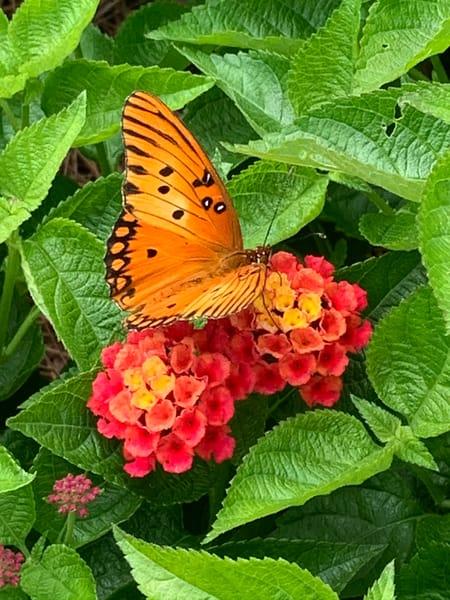 Butterfly 1 Art | Nisha Strain