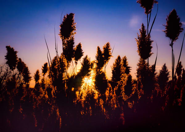 Cattail Silhouettes Sunset Photography Art | Robert Vielee Photography