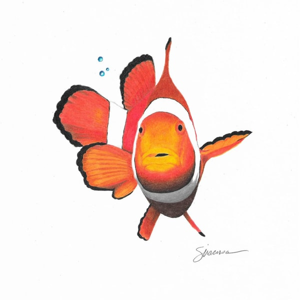 Clown Fish Original Drawing Art | juliesiracusa