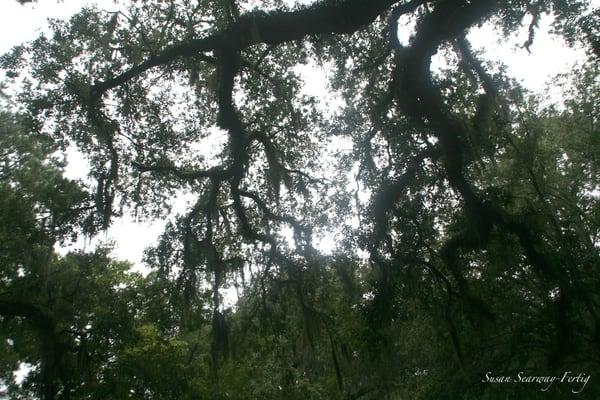 Sky Through Branches Art | Susan Searway Art & Design