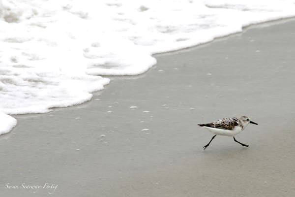 Run Shorebird Run Art | Susan Searway Art & Design