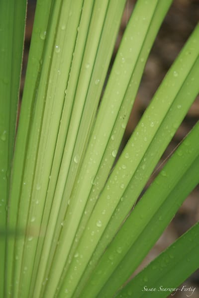Palm Dew Drops Art | Susan Searway Art & Design