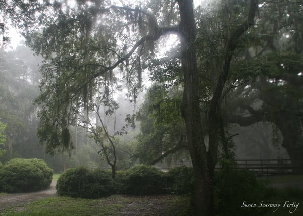 Southern Nature Charm Art | Susan Searway Art & Design
