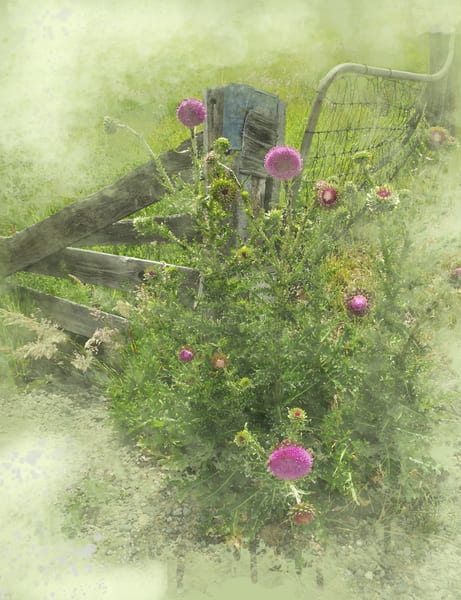 Purple Thistles Art | Art from the Soul