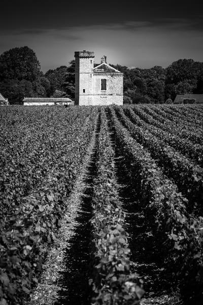Burgundy Vineyard Photography Art   Lodge Photo