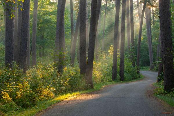 DP673 Wilderness Dr Sun rays