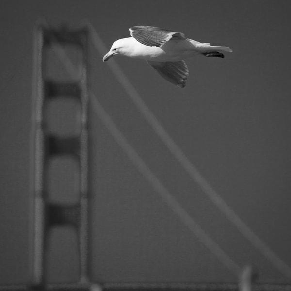 Hanging in San Francisco
