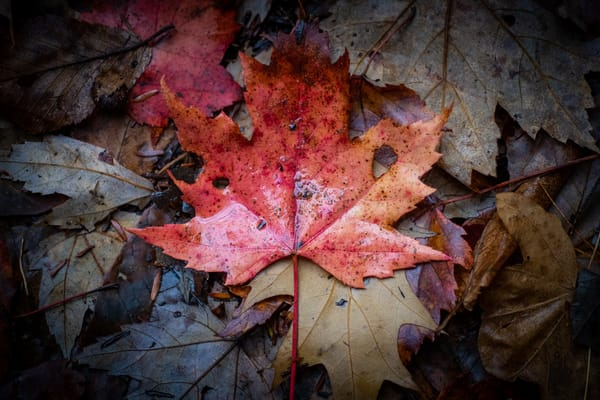 End Of Fall Photography Art | Scott Krycia Photography