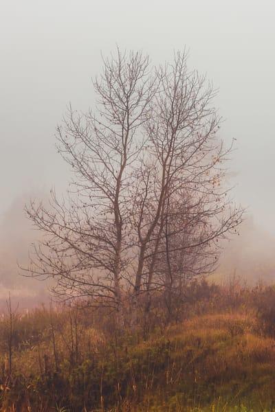 Misty Morning Photography Art | Scott Krycia Photography