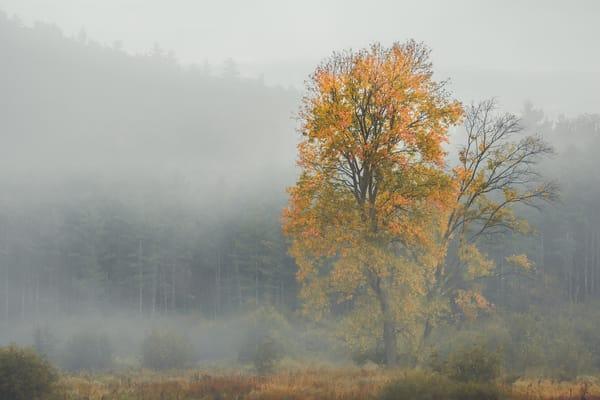 Mist Photography Art | Scott Krycia Photography