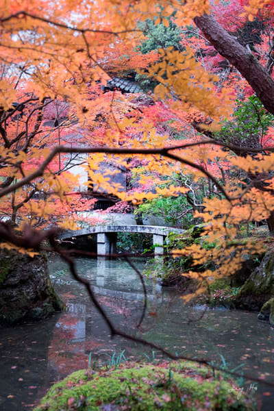 Fine art photograph of a Japanese garden during autumn by Ivy Ho