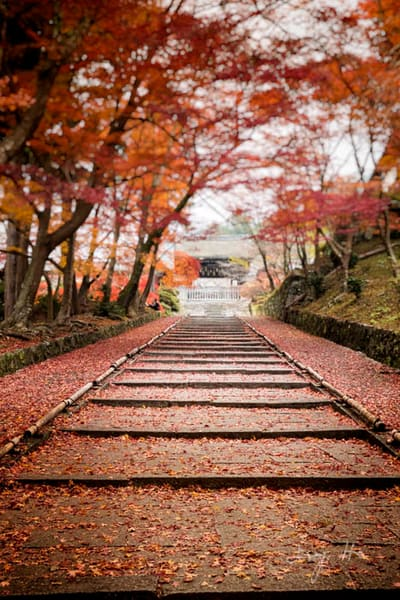 Fine art photograph of a autumn leaves-lined path for sale by Ivy Ho