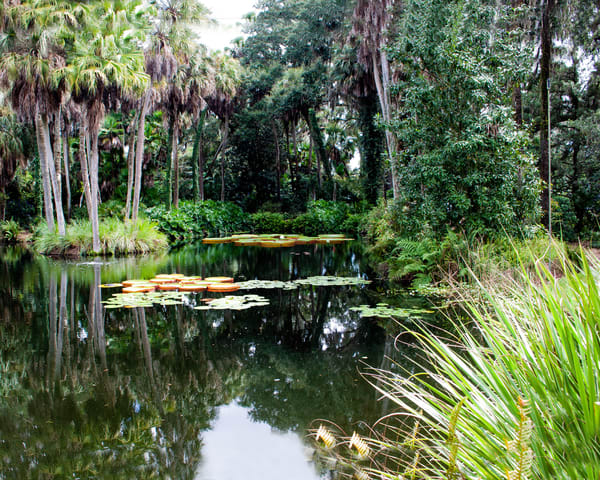 The Pond Photography Art | It's Your World - Enjoy!