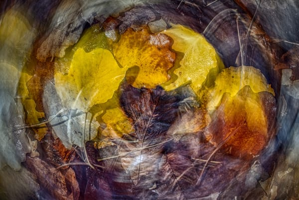 Swirl Of Autumn Colour Art | Martin Geddes Photography