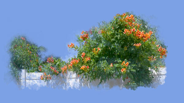Orange Trumpet Vine Art | Art from the Soul