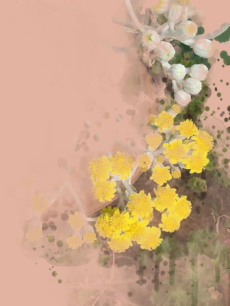 Dusty Miller Flowers  Art   Art from the Soul