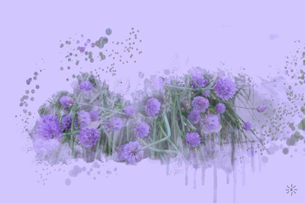Onion Chive Flowers Art   Art from the Soul