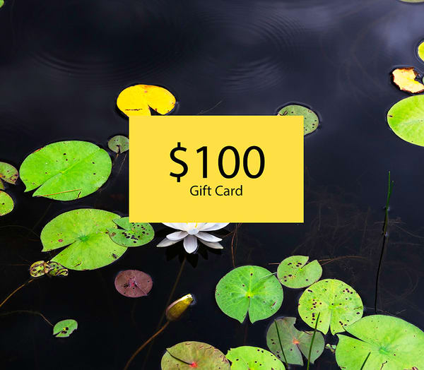 $100 Gift Card | Elizabeth Stanton Photography