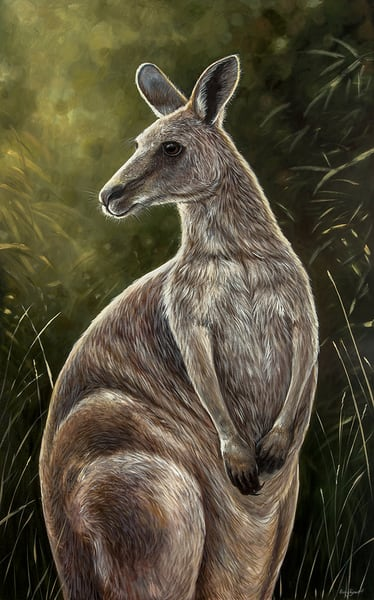 Molly - Eastern Grey Kangaroo