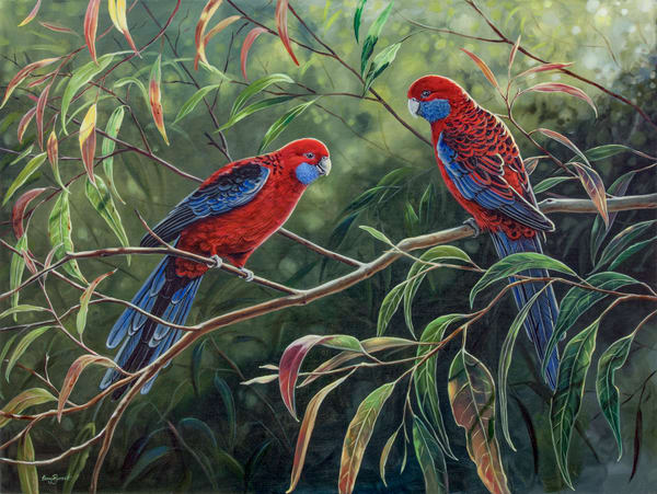 Crimson Rosellas - In the Dappled Light