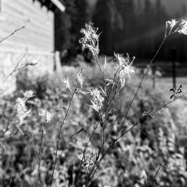 Flower Threads Photography Art   Ron Olcott Photography