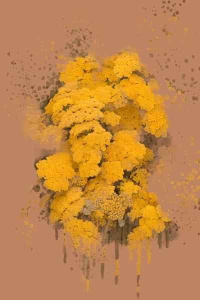 Yarrow In Bloom  Art   Art from the Soul
