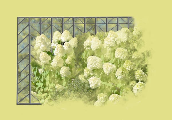 Gatsby Moon Oakleaf Hydrangea Art   Art from the Soul