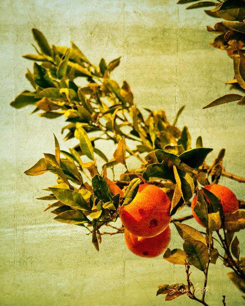 Orange Branch Vintage Art | Sharon Beth