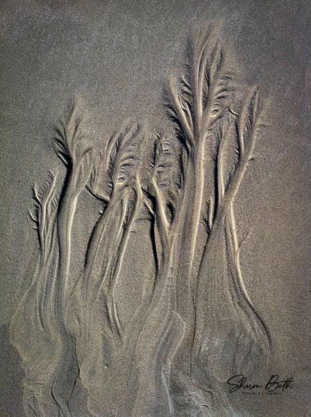 Sand Rivers Art | Sharon Beth