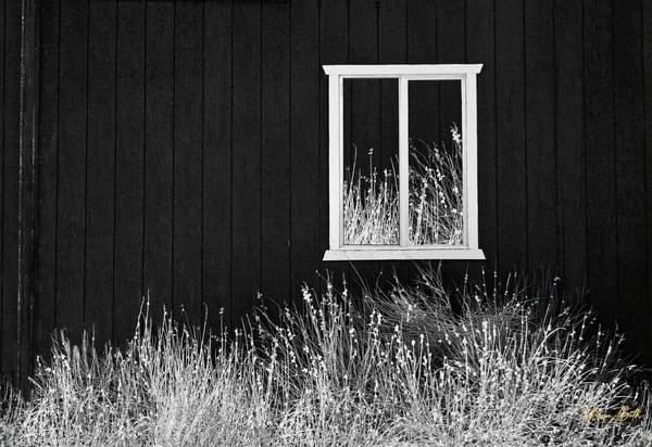 Infrared Barn Art | Sharon Beth
