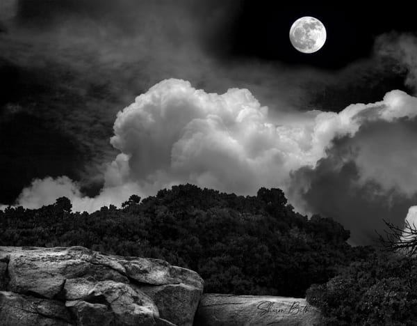 Moonight Scape Art | Sharon Beth