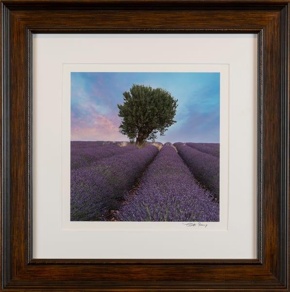 tree, lavender, Valensole, Provence, purple