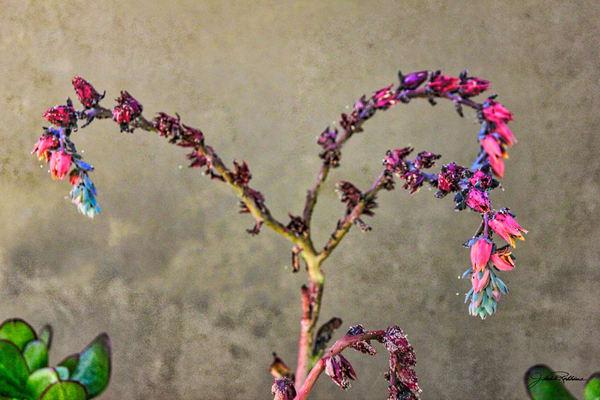 tiny, flowers, succulents, announcement, jackierobbinsstudio, photographicprints, buyartonline