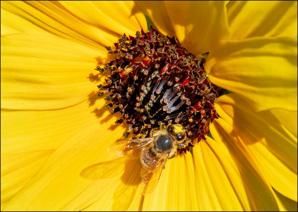 Busy Bee Photography Art | Ed Sancious - Stillness In Change