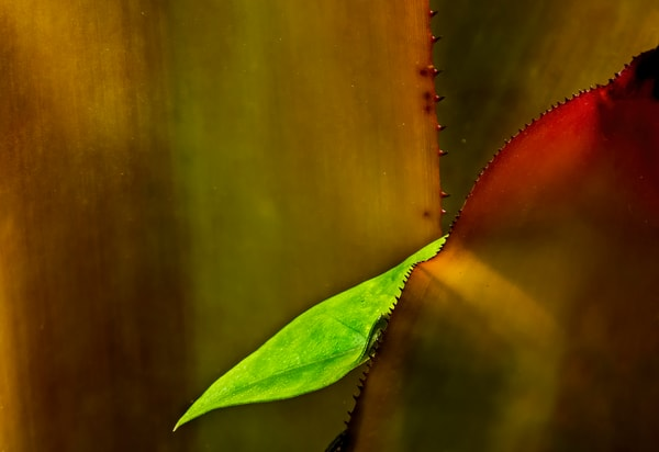 Prickly Photography Art | Ed Sancious - Stillness In Change