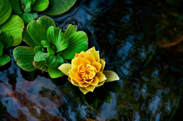 Yellow And Green Afloat Photography Art | Ed Sancious - Stillness In Change