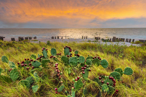 Coastal Texas Photography Art | John Martell Photography